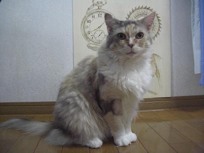 美人ミケコ
