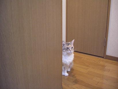 みけことドア