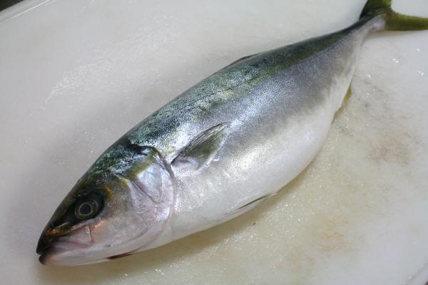 2010-1-12-魚