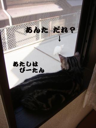 ⑧シロ(仮名)