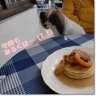 cats1_20120213001010.jpg