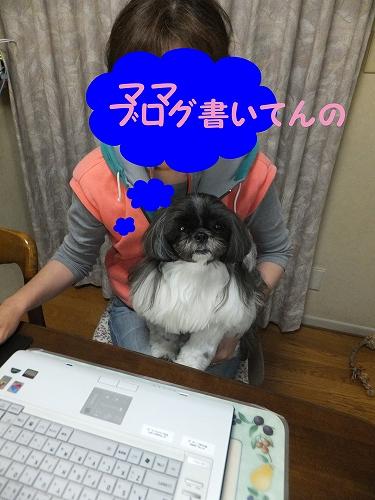 BLOGDSC110528067_edited-1.jpg