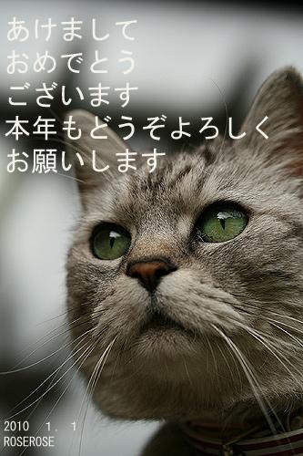 mimibig.jpg