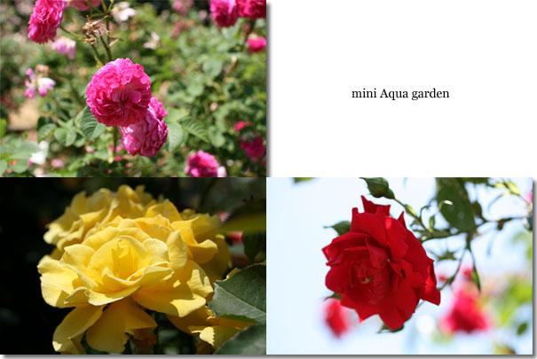 20100606_08.jpg