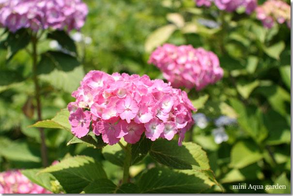 20100615_07.jpg