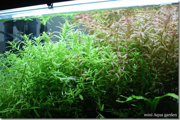 rotara_green20101128.jpg