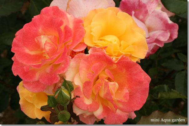 y_20100522_07.jpg