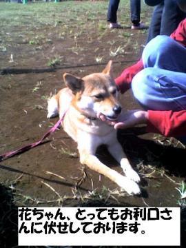 hanachanfuse.jpg