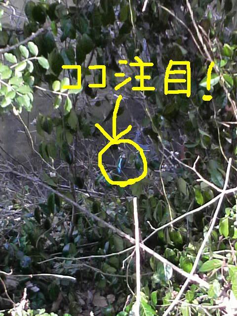 コピー ~ P1000329 ココ注目