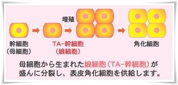TA-幹細胞
