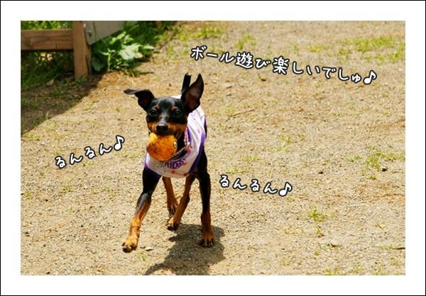 DSC05984-0-0011.jpg