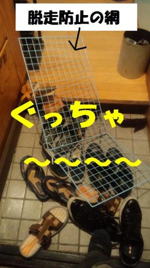 blog 079-001-1