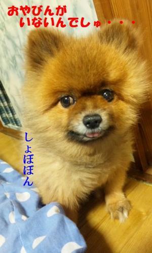 blog 104-001-1