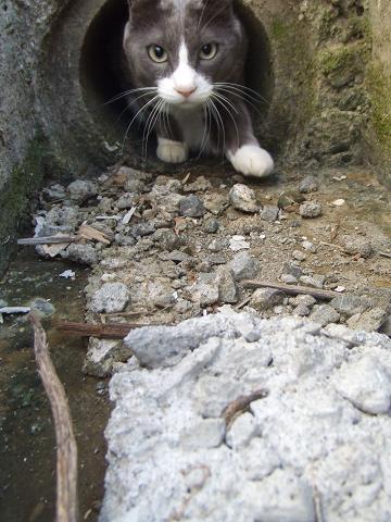 2この丸いトンネルいいね