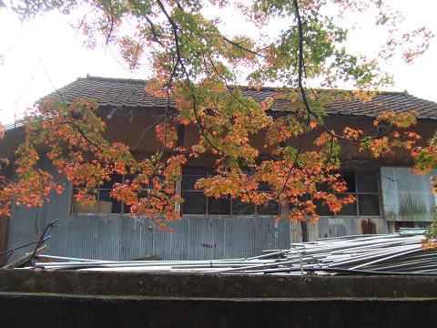 5神社の紅葉