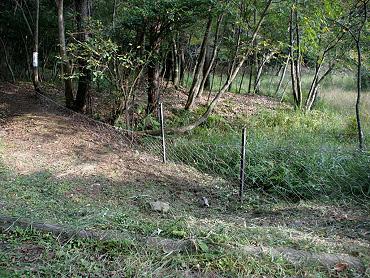 カキツバタの環境整備-5