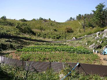 ドリーネ耕作畑の収穫祭-02