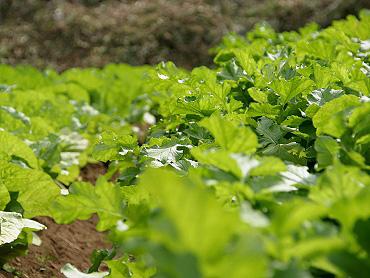 ドリーネ耕作畑の収穫祭-01