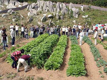 ドリーネ耕作畑の収穫祭-06