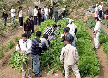 ドリーネ耕作畑の収穫祭-07