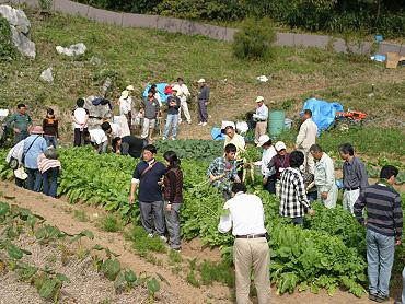 ドリーネ耕作畑の収穫祭-08