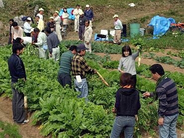 ドリーネ耕作畑の収穫祭-09