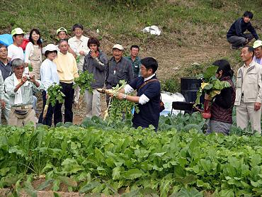 ドリーネ耕作畑の収穫祭-10