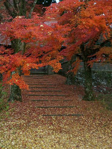 晩秋の養泉寺-1