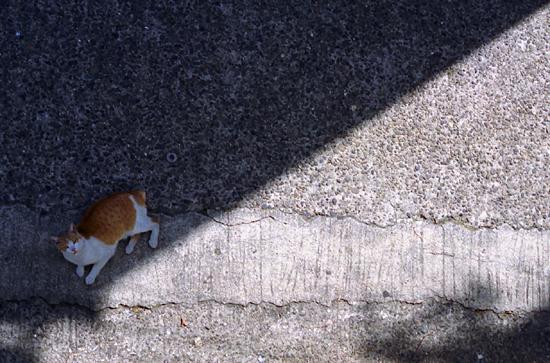 sadow cat