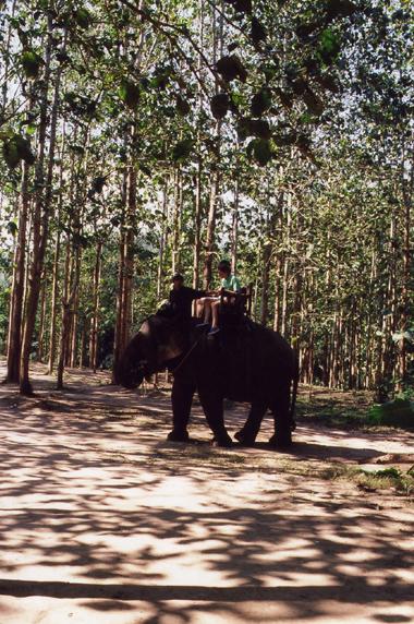 elephantlaos