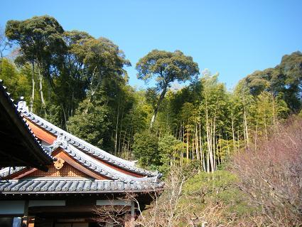 鈴虫寺へ3