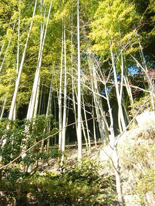 鈴虫寺へ5