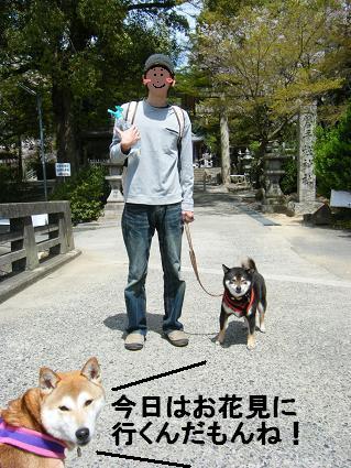 わんこお花見2010!