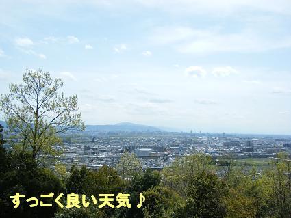 わんこお花見2010!3