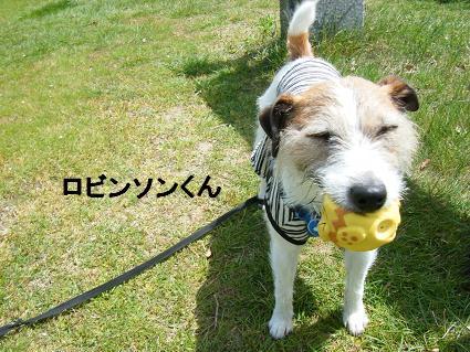 わんこお花見2010!7