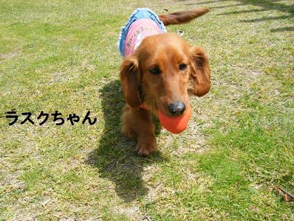わんこお花見2010!5