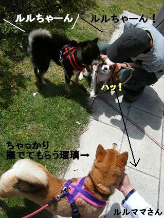 わんこお花見2010!8