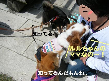 わんこお花見2010!9