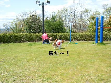 わんこお花見2010!16