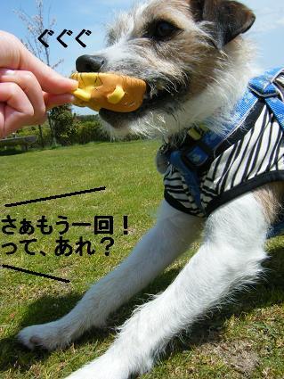 わんこお花見2010!24