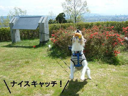 わんこお花見2010!23