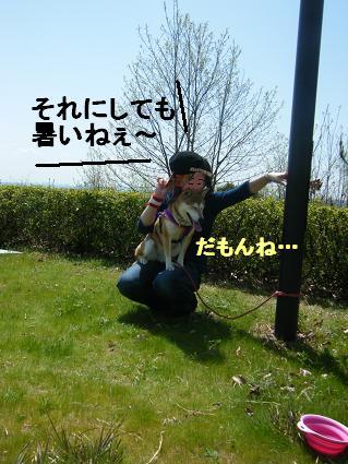 わんこお花見2010!28