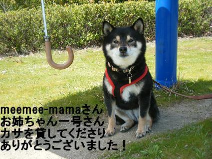 わんこお花見2010!30