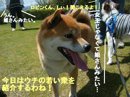 わんこお花見2010!35