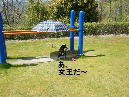 わんこお花見2010!33