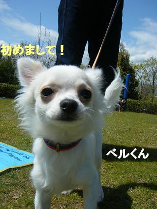 わんこお花見2010!38
