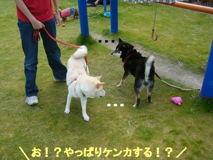 わんこお花見2010!52
