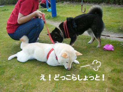 わんこお花見2010!49