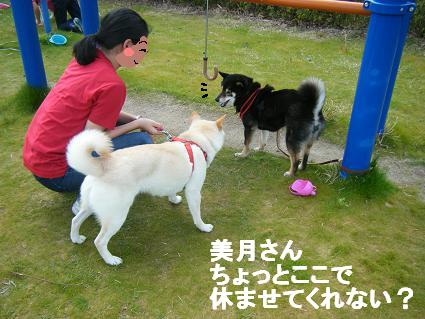 わんこお花見2010!48