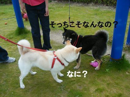 わんこお花見2010!51